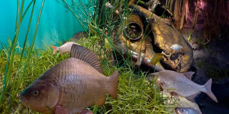 natuurmuseum onderwatersafari open